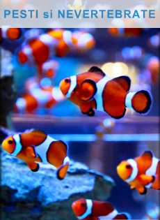 exotic fish and inevertebrates