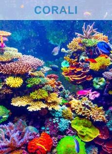 coralS SPS LPS SOFT