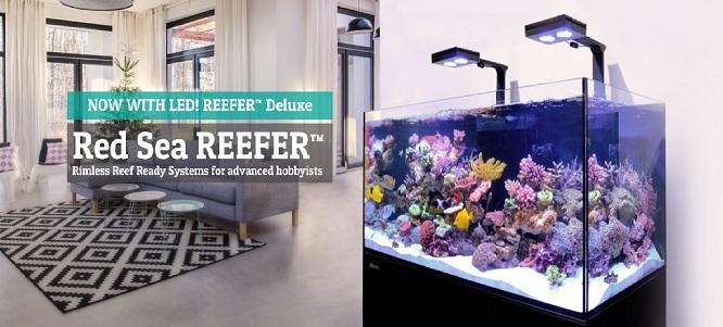 Acvarii marine complete Red Sea Deluxe Reefer 250 350 450 Preturi Avantajoase Coralfarm livrare rapida