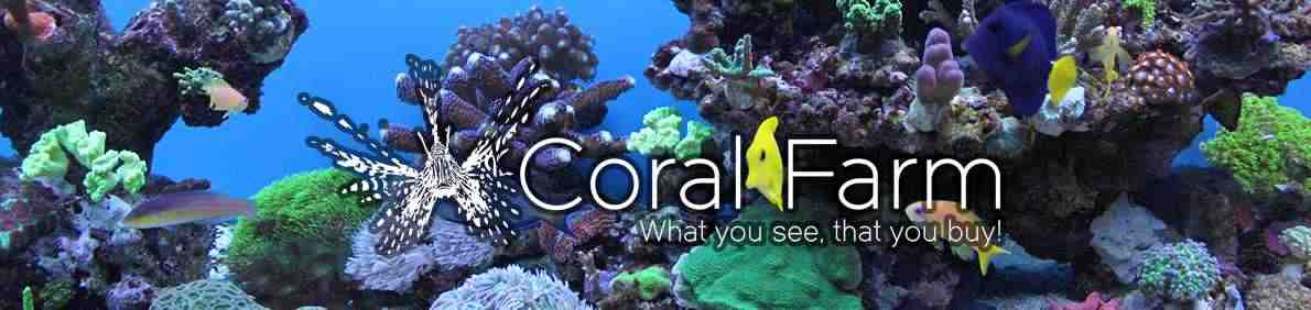 CoralFarm.ro pesti exotici corali acvarii la comanda intretinere mentenanta acvariu