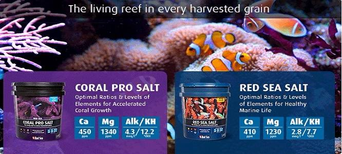 Sare Red Sea Coral Pro Vs Red Sea Salt