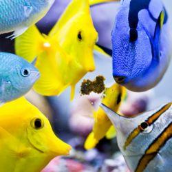 Hrana pesti Easy Reef Masstick 14g
