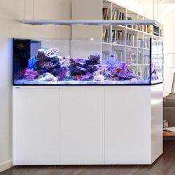 Red Sea Peninsula P650 Deluxe 1.60 m (incl. 4 X ReefLED 90 & 1x Pendant)