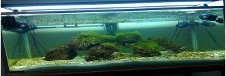 Cum sa scapi de algele din acvariu