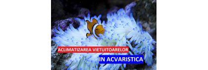 aclimatizarea pestilor si nevertebratelor in acvarii marine si de apa dulce