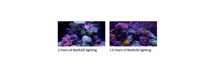 Reef Led RED SEA lightning